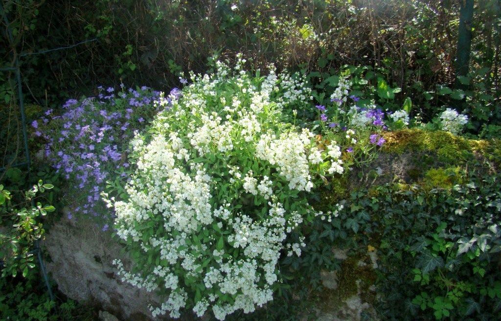 Chambres d'hôtes dans un parc fleuri et arboré en Auvergne