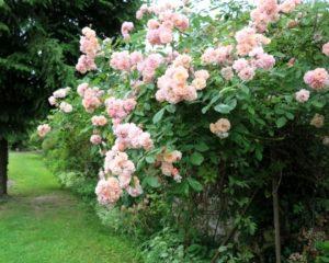 jardin fleuri de la maison d'hôtes La Béalière en Auvergne